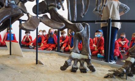 Els dinosaures i els fòssils (2n i 3r d'EP)