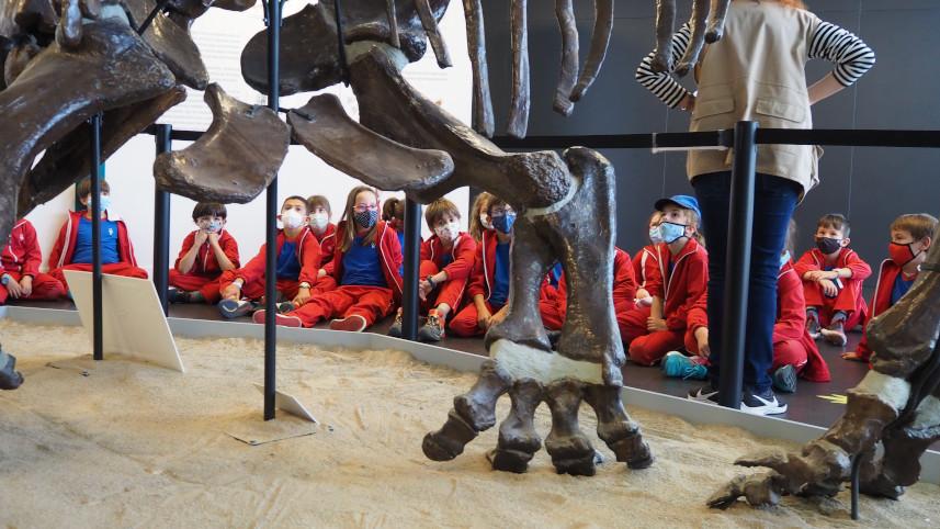 Los dinosaurios y los fósiles (2º y 3º de EP)